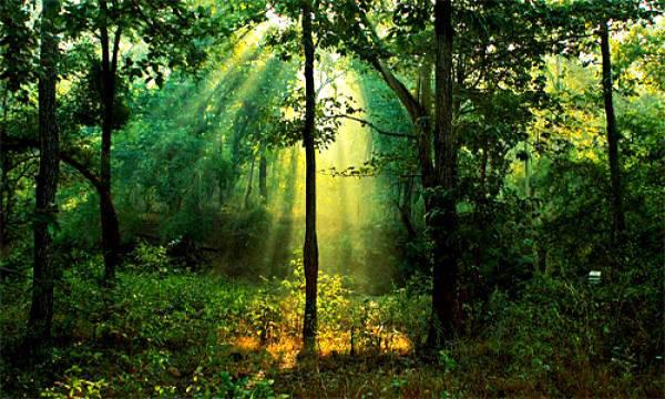 Ο άνθρωπος που φύτεψε ένα ολόκληρο δάσος μόνος του!