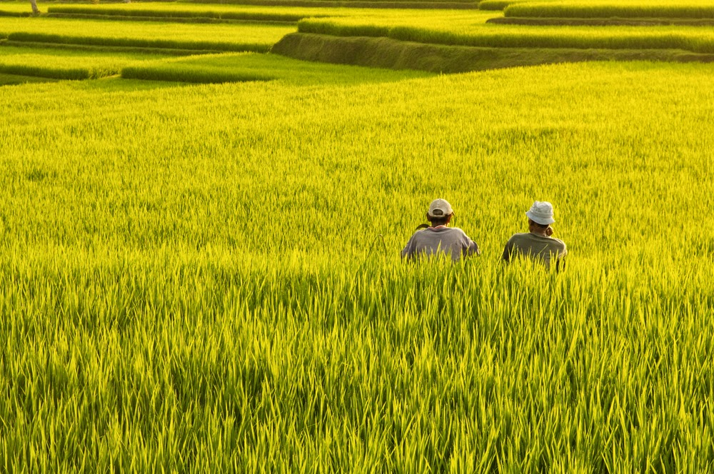 Negara Negara Dengan Pertanian Terbaik Di Dunia Apakah Indonesia