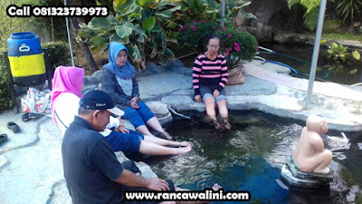 Kolam Terapi Ikan di Walini