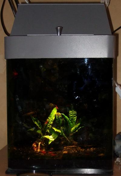 Florians Aquarien  DIY Abdeckung f u00fcr Dennerle Nano Cube