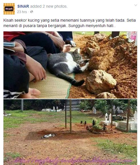 Kucing yang Setia Hingga Hujung Nyawa