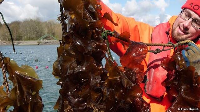 Algas do mar báltico podem auxiliar no tratamento do câncer