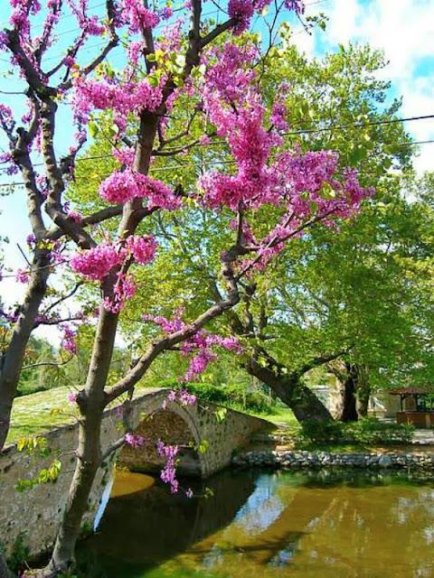 Η βυζαντινή γέφυρα με τα χρώματα της Άνοιξης