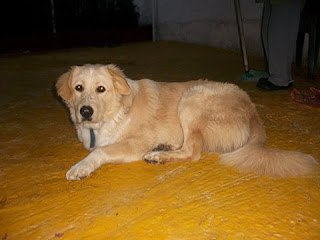 Βρέθηκε στον Υμηττό, σύνορα με Αγ. Μαρίνα Ηλιούπολης, ο σκυλάκος της φωτογραφίας. Τον αναζητά κανείς;