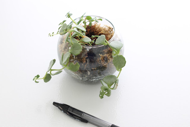 potted plants and other handmade holiday gift ideas via www.julieblanner.com