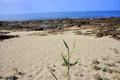 Una spiaggia a Palinuro
