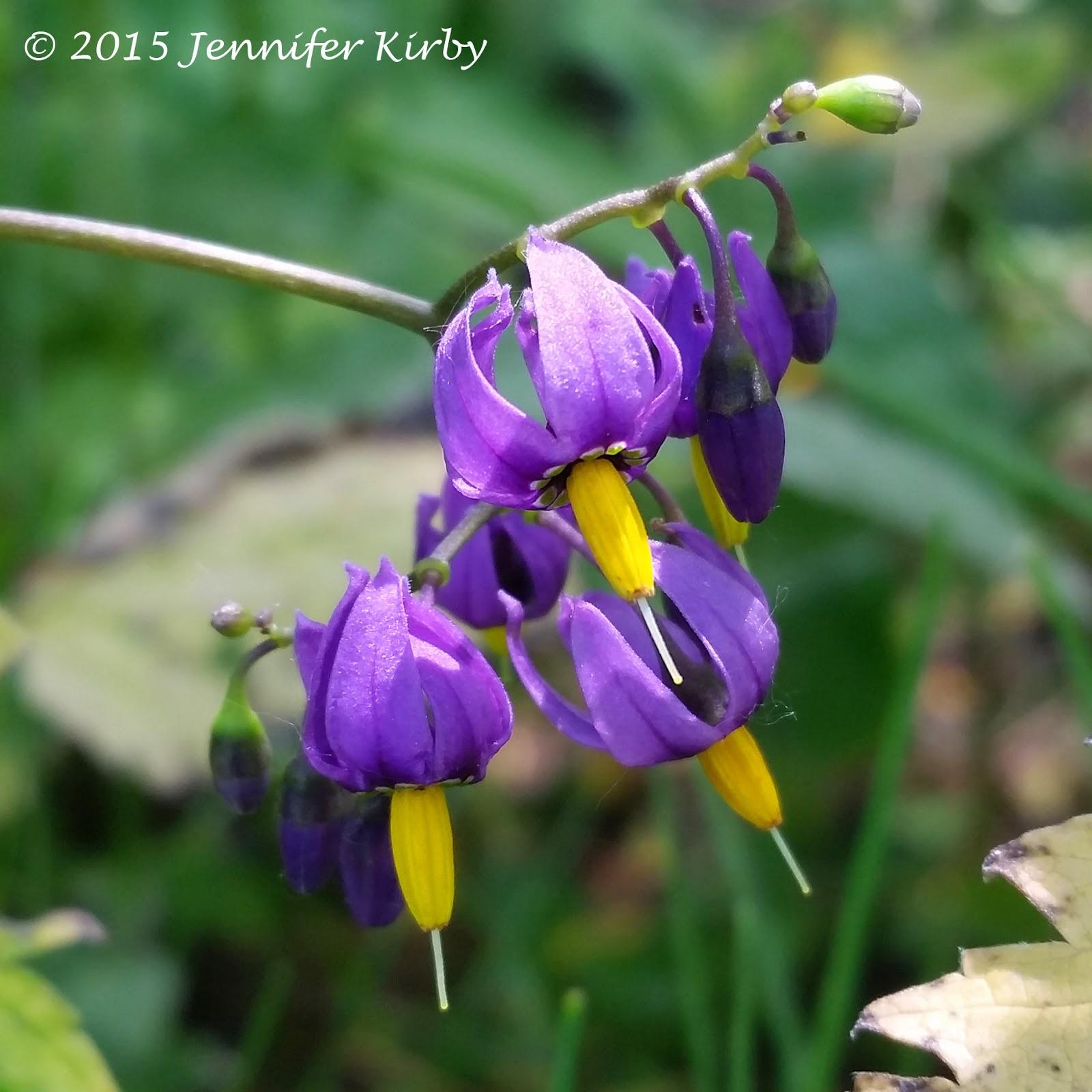 Purple Flowers With Yellow Centers Savingourboysfo