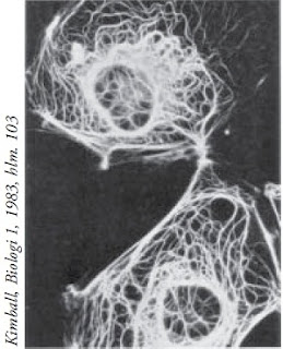 Struktur filamen antara