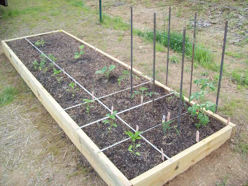 Mike And Lisa 39 S World Chapter 66 My Square Foot Garden 2