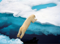 Polar bears maintain their body temperature
