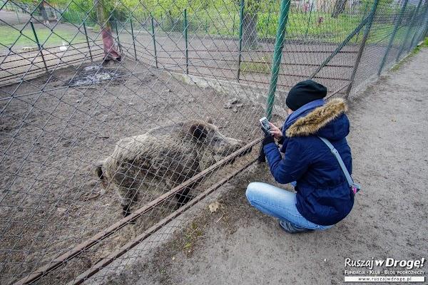 Miłosna - mini zoo dla zwierzaków