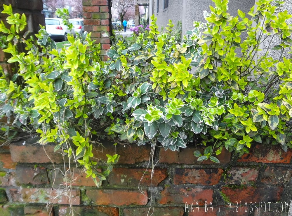 Greens in a brick planter