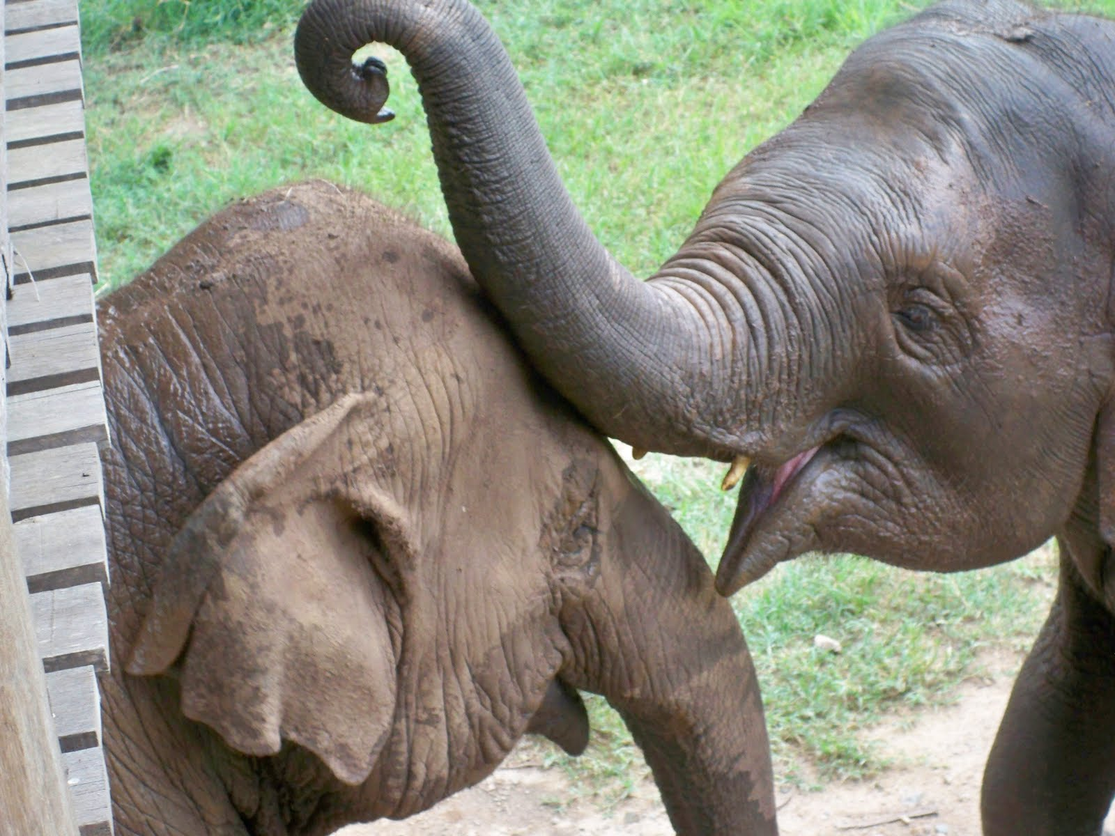 elephant world chiang mai