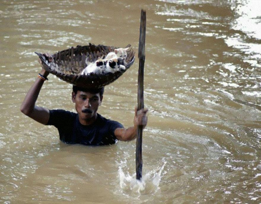 30 of the most powerful images ever - During massive floods in Cuttack City, India, in 2011, a heroic villager saved numerous stray cats by carrying them with a basket balanced on his head
