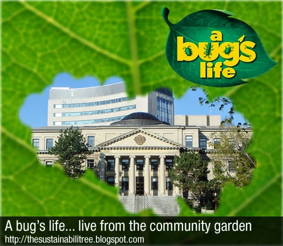 A workshop about the bugs living at the community garden