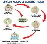 CICLO DE LA DESNUTRICION