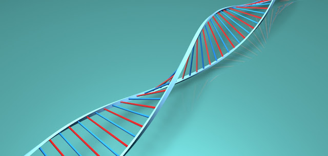 Acido desoxirribonucleico o ADN en biologia