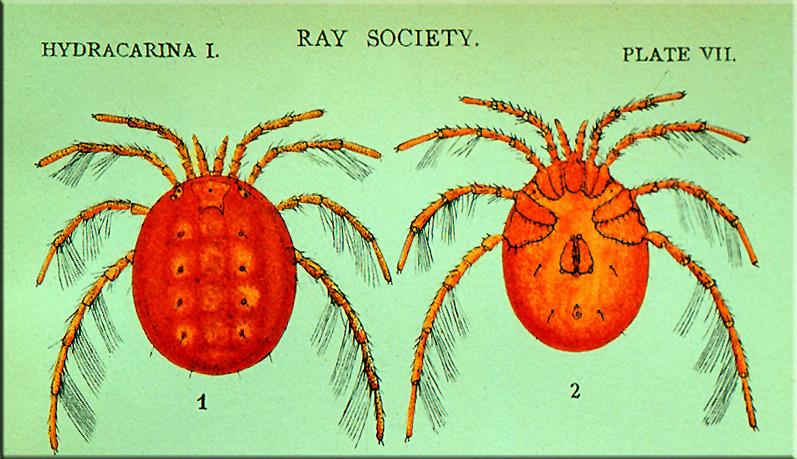 Donu0027t Eat Red Mites Or Bugs