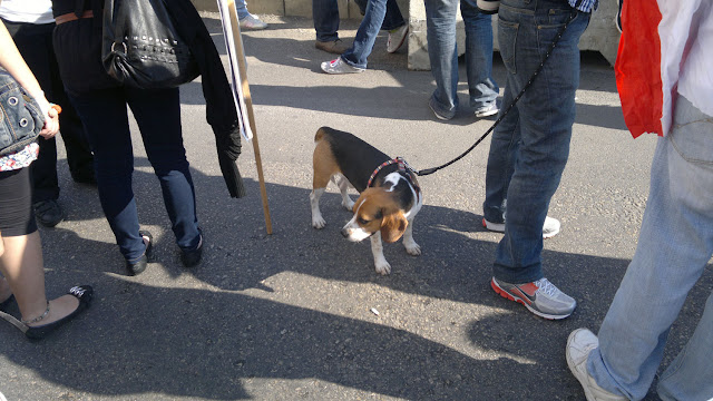 secular dog