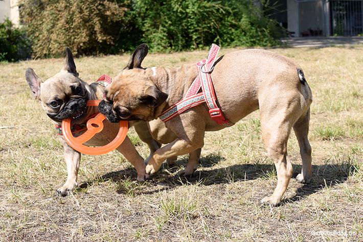 Bionic Tug n'Toss Frisbee im Test