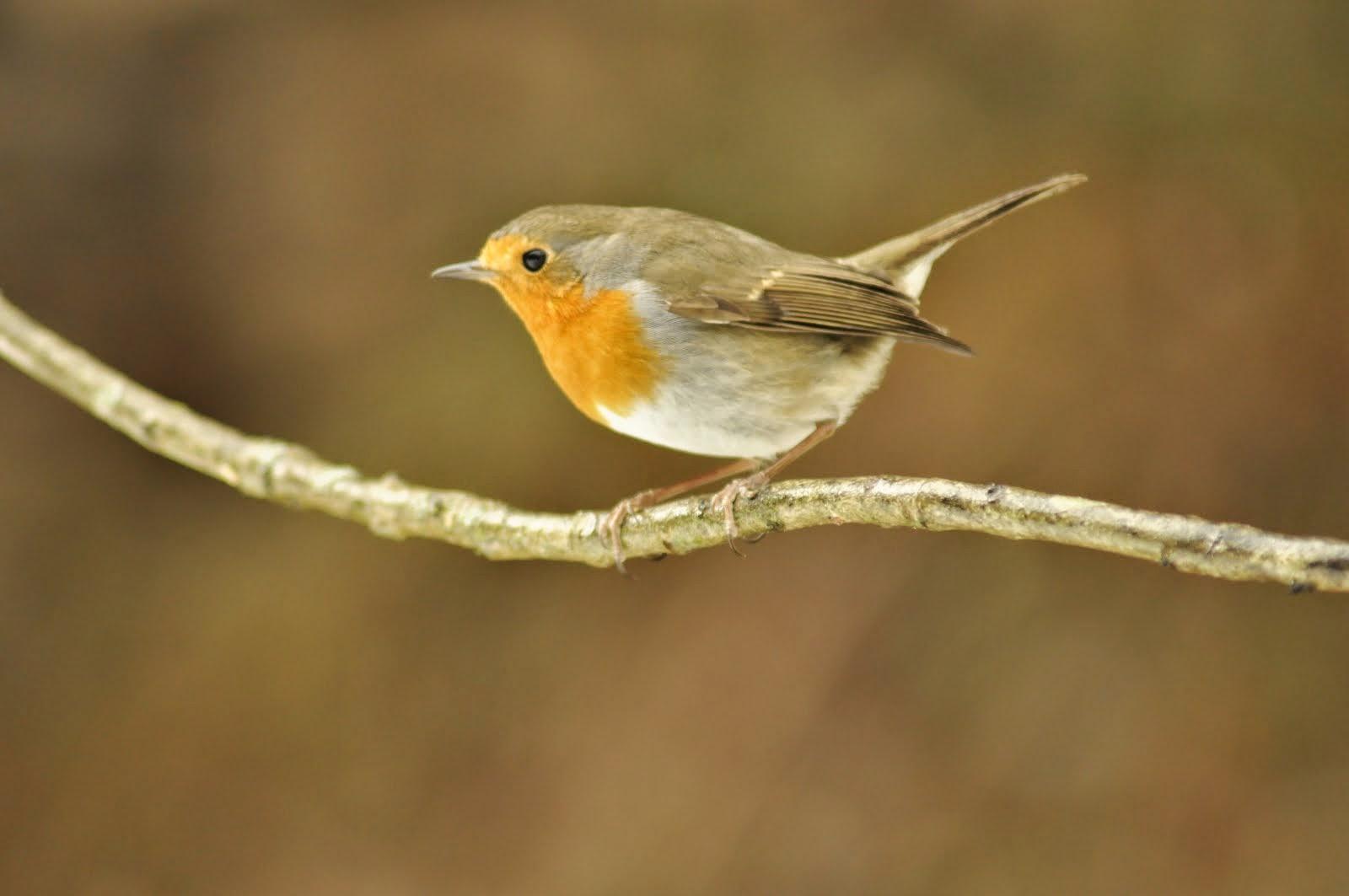 ocells d'hivern
