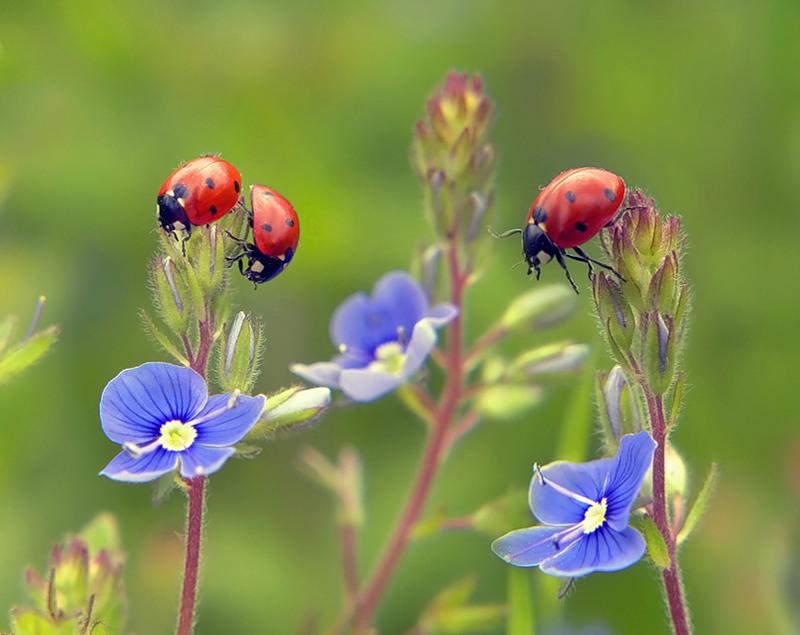 Очень красивые цветы