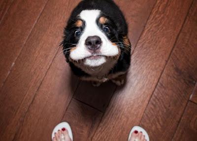 Cute and Funny Animals-Cute and Funny Animals pictures funny humor pics