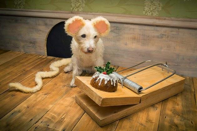 christmas dog peter thorpe holiday cards