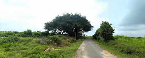 Denkanikottai Reserve forest, Tamil Nadu