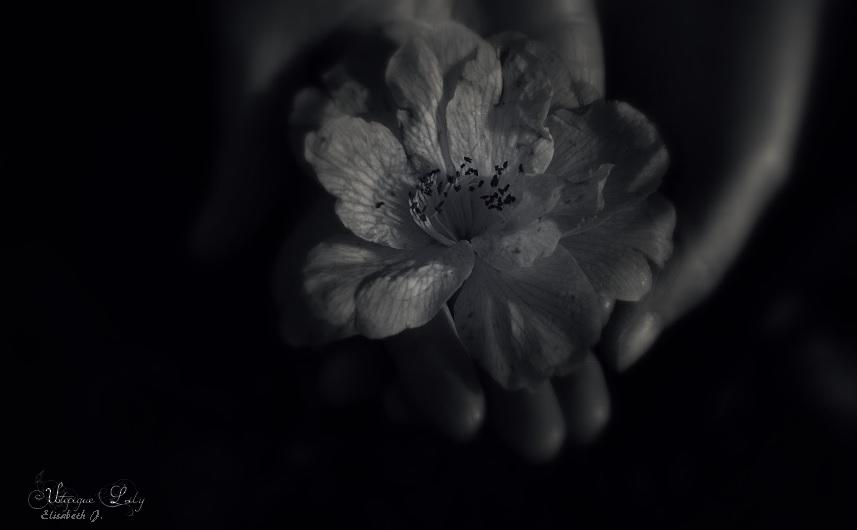 Utopique-Lily