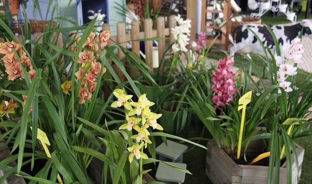 Um jardim para cuidar mar o 2013 for Cuidados orquideas interior