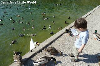 Toddler feeding the ducks