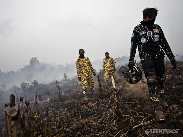 Greenpeace : Perlindungan Gambut Solusi Jangka Panjang Kebakaran Hutan