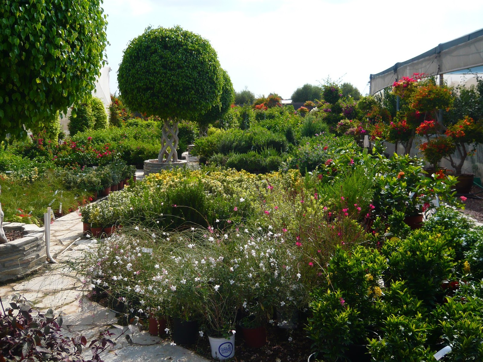 Kids have fun in cyprus qgardens a garden heaven on cyprus for Garden trees b q