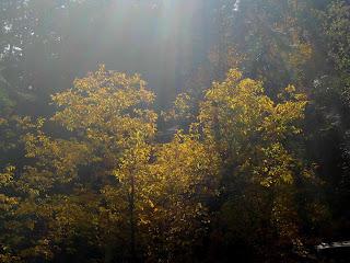 prescott Ontario,Prescott,nature pics