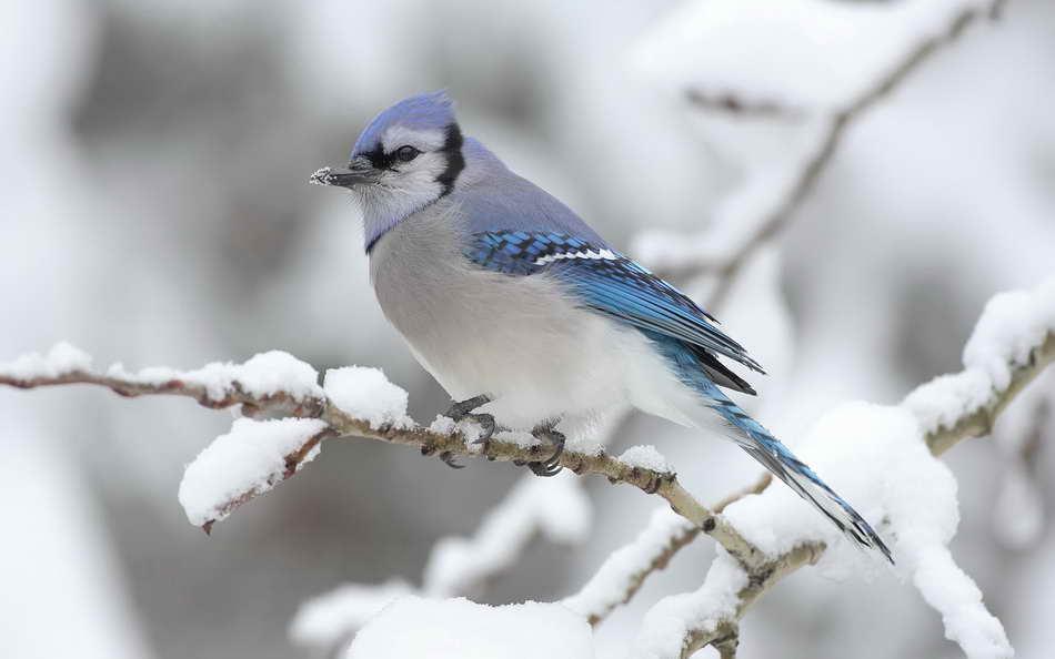 animals-in-the-snow-03.jpg