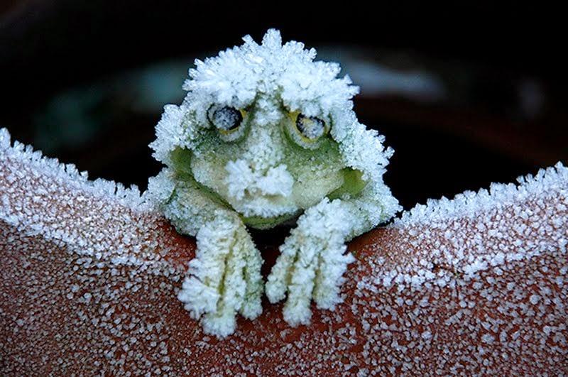 נפלאות הבריאה - צפרדע העץ