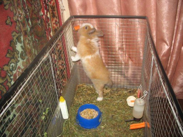 Как сделать клетку декоративному кролику своими руками