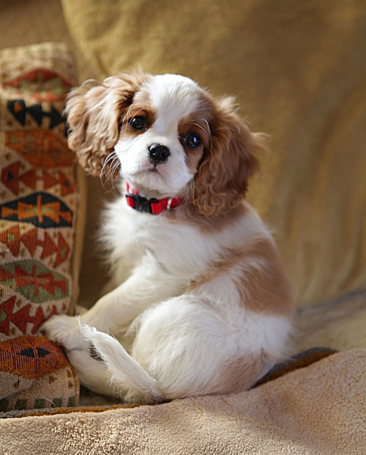 Top 5 Dog Breeds That are Only For Rich Owners