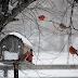 Loving Winter...