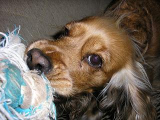 εκπαίδευση σκύλων με παιχνίδια - τράβα 5