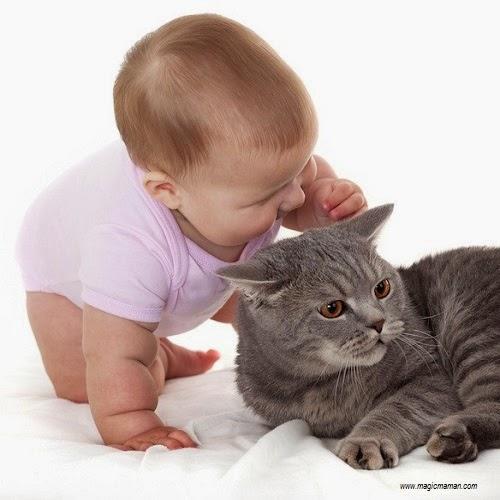 Chambre A Coucher Nature : bébé en divers comportement avec un chat bébé et chat