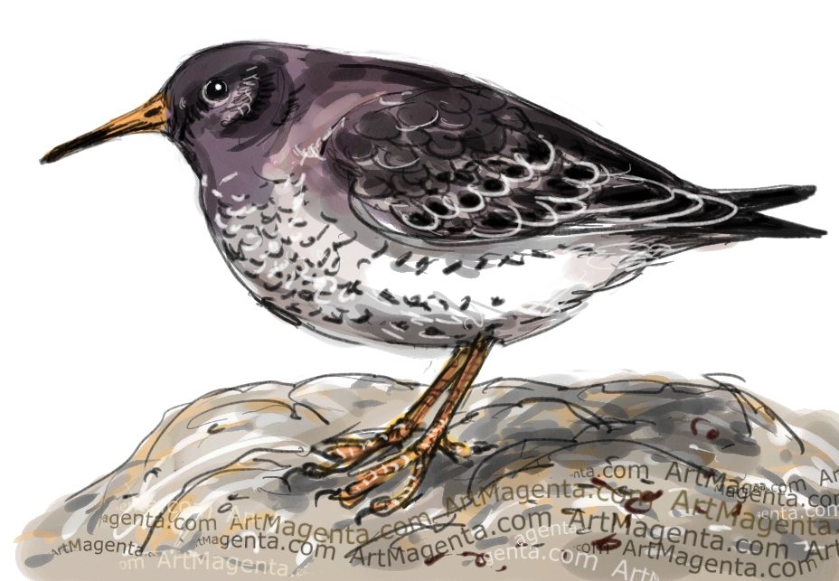 En fågelmålning av en skärsnäppa från Artmagentas svenska galleri om fåglar