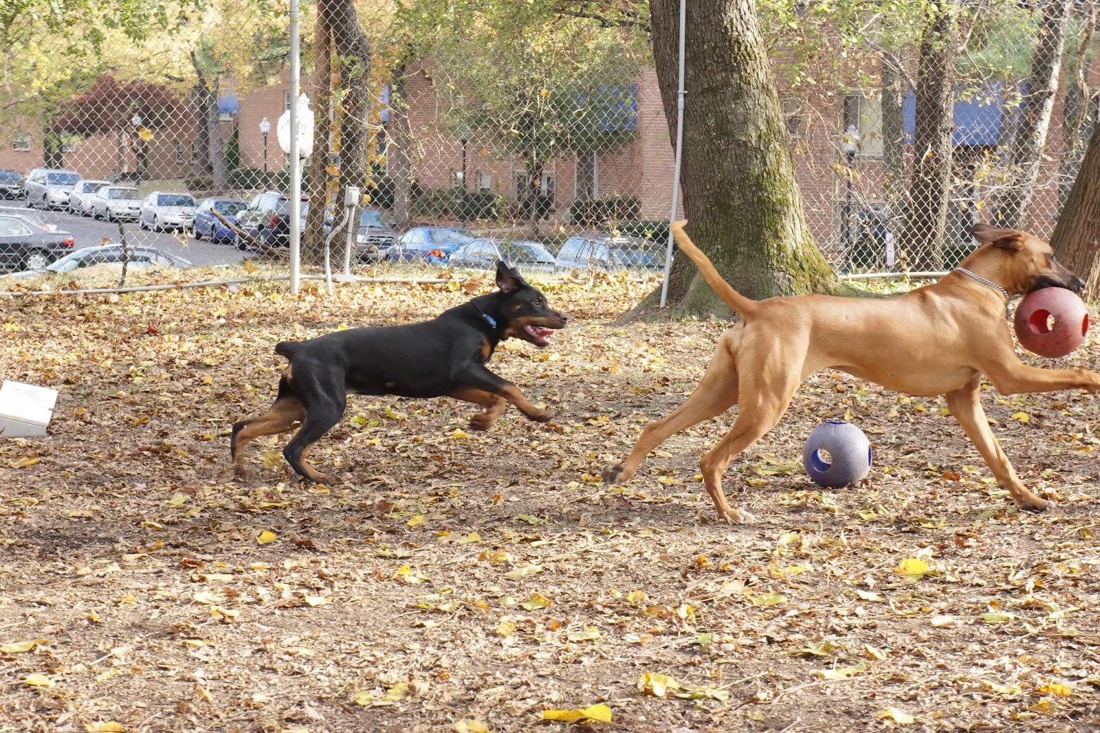 Dog Day Care Laurel Md