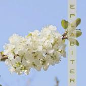 Eplabiter