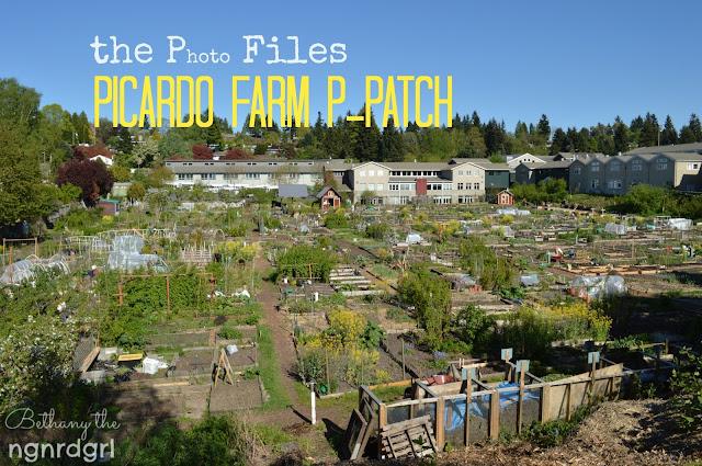 Picardo Farm P-Patch | ngnrdgrl.blogspot.com