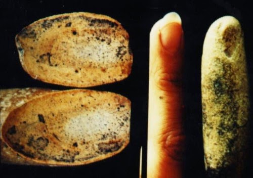 This Should Not Exist: A 100-Million-Year-Old Fossilized Human Finger