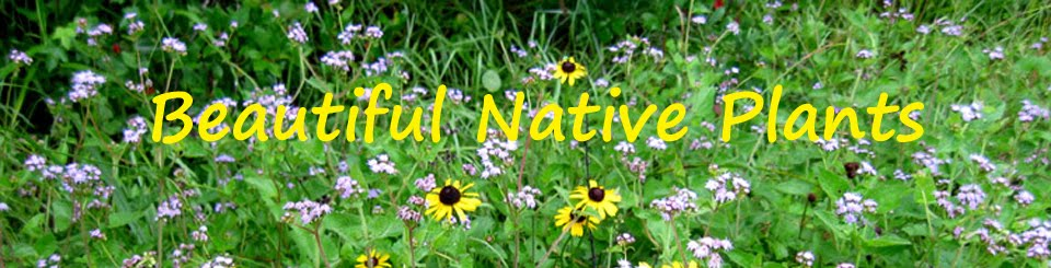 BeautifulNativePlants