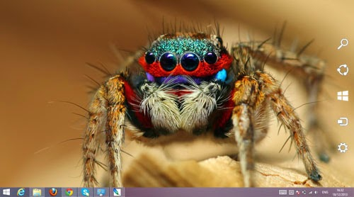 Spider Animal Theme For Windows 7 And 8 8.1