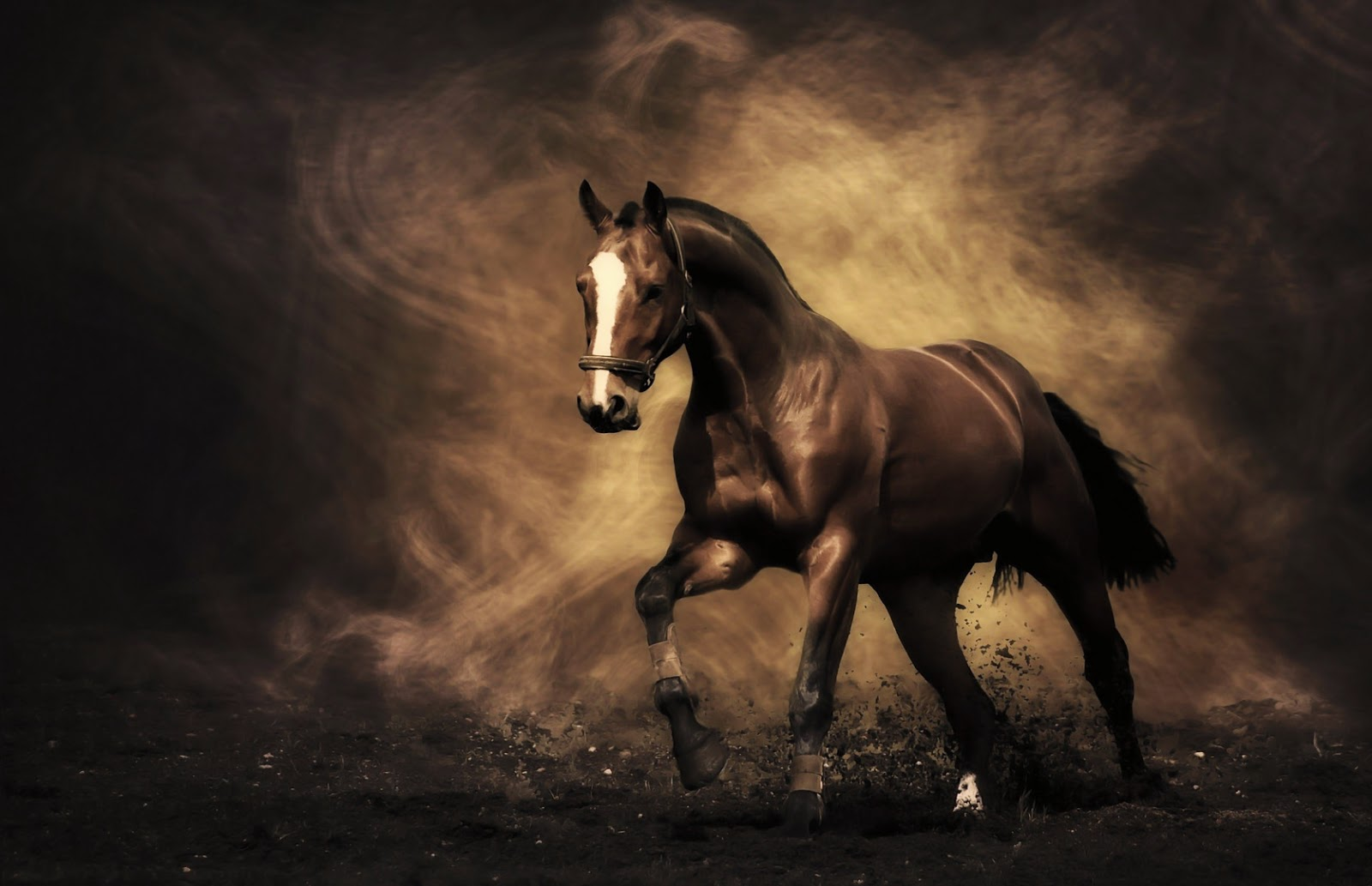 Vaquero Horse Backgrounds